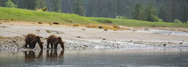 Spirit Bear Lodge Bären am Wasser