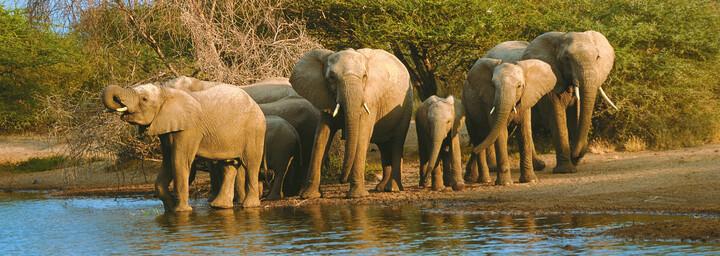 Elefanten an Wasserstelle, Krüger Nationalpark