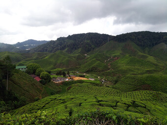 Reisebericht Malaysia - Cameron Highlands