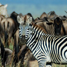 Serengeti Fly-In