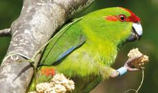 Naturparadies Zealandia
