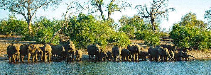 Elefanten Chobe Nationalpark