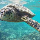 Besuch im Schildkröten Hospital
