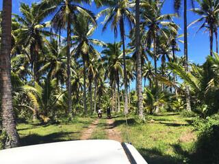 Cook Island Reisebericht - Straße auf Atiu