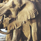 Tsavo & Amboseli