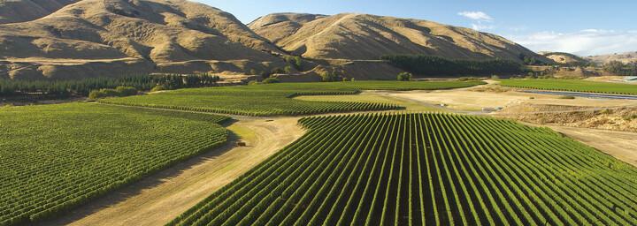 Weinreben und Berge in der Weinregion Martinborough