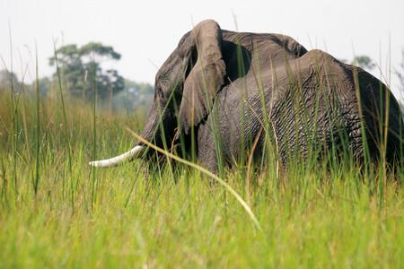 Reisebericht Botswana - Guide Langos