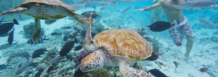 Schildkröten auf Tahiti
