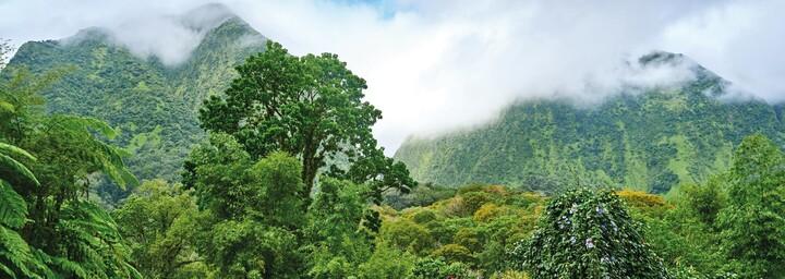 Martinique Inselinneres