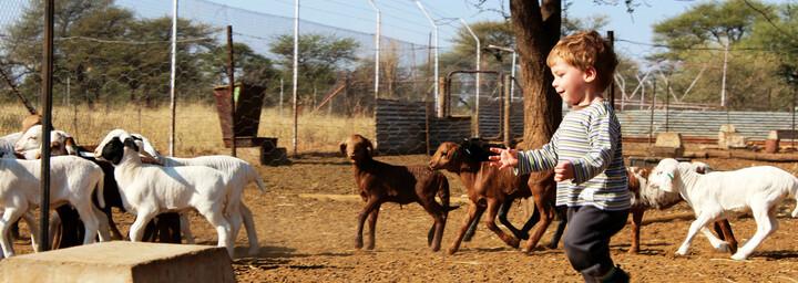 Farm - Namibia