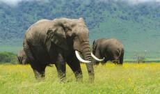 Tansanias unberührter Süden