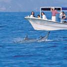 Delfin Beobachtung
