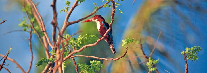 Vogel im Kui Kuri Nationalpark