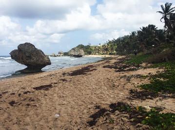 Reisebericht Karibik: Bathsheba Strand, Ostküste Barbados