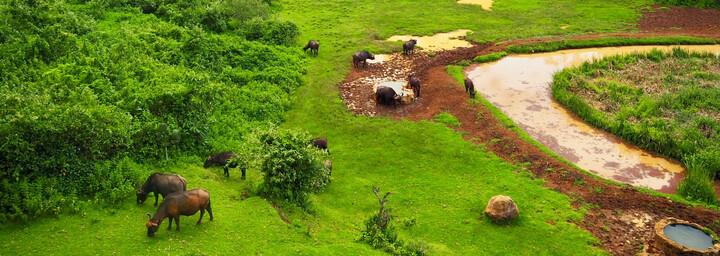 Kenia Reisebericht - Büffel am Wasserloch im Mount Kenya Nationalpark