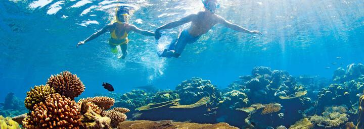 Unterwasserwelt des Indischen Ozeans