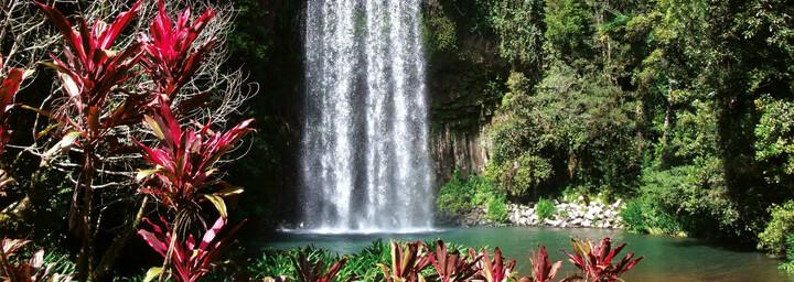 Millaa Milla Wasserfälle Atherton Tablelands