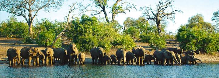Elefanten am Wasserloch im Chobe Nationalpark