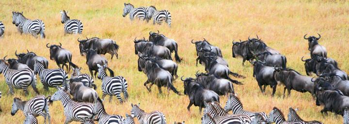 Tierherde im Serengeti Nationalpark