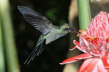 Trinidad & Tobago Vogel