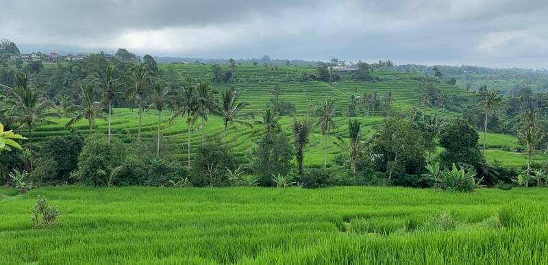 Reisebericht Bali Jatiluwih Reisterrassen auf Bali