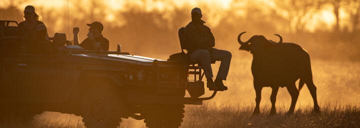Foto-Safari im Sabi Sands Game Reserve