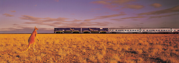 Zugreise mit dem Indian Pacific im Outback mit Kanguru