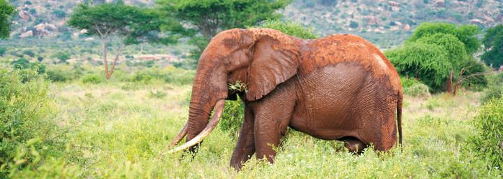Elefant im Tsavo Nationalpark