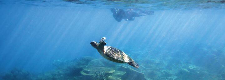 Schildkröte Coral Bay