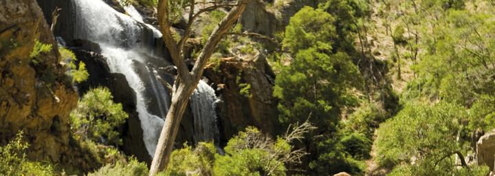 Grampians Nationalpark - MacKenzies Falls