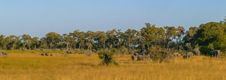 Elefantenherde im Okavango Delta