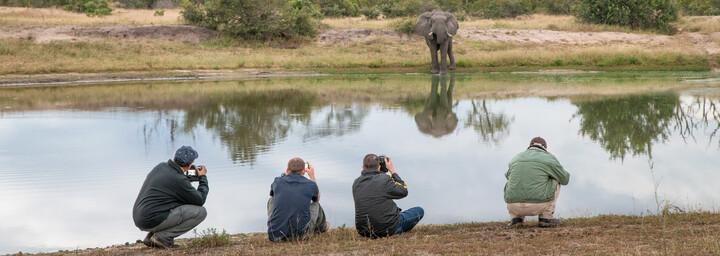 Fotografieren eines Elefanten am Wasserloch - Sabi Sands Game Reserve