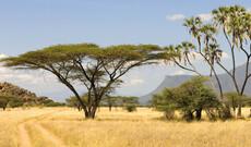 Masai Mara Fly-In Tour