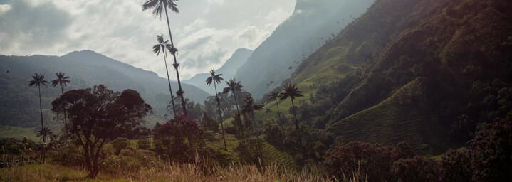 Cocora-Valley Armenia Kolumbien