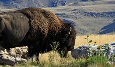 Rund um den Yellowstone