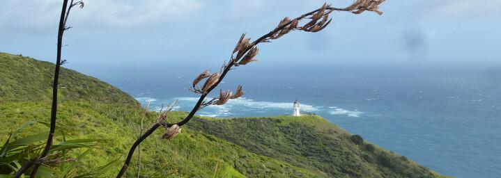 Reisebericht Neuseeland - Cape Reinga Leuchtturm