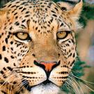 Auf Safari in Südafrika & Strandparadies Mauritius