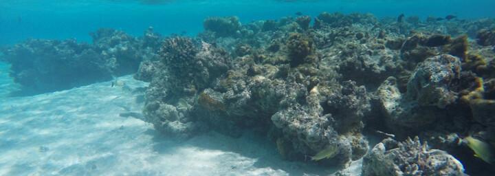 Cook Inseln Reisebericht - Schnorcheln auf Aitutaki