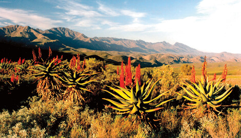 Scenic Route 62 Südafrika