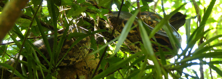 Madagaskar Reisebericht: Boa Constrictor