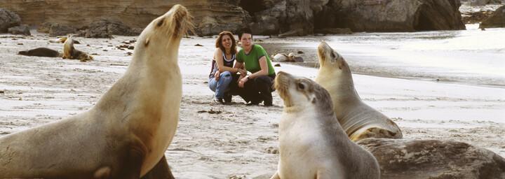 Seelöwen auf Kangaroo Island