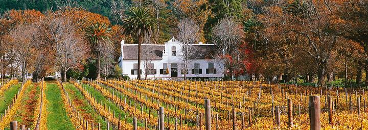 Weingegend Südafrika