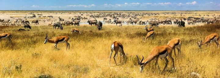 Tiere im Etosha Nationalpark