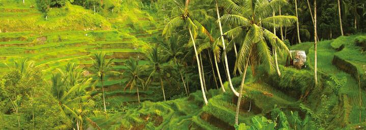 Reisterrassen auf Bali