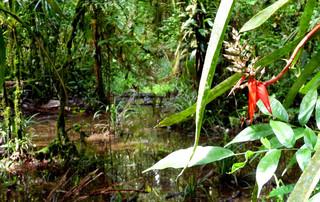 Ecuador Reisebericht - Naturreservat Cuyabeno