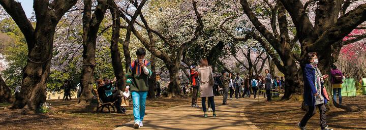 Japan Tokyo Innenstadt Kirschblüten