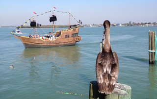 Florida Reisebericht - St. Johns Pass mit Schiff