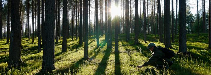 Wald bei Kuusamo