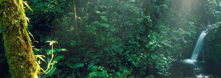 Dschungel in Monteverde in Costa Rica