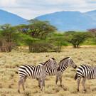 Tierparadies Kenia